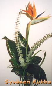 Kolibrikukka